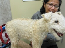 why more veterinarians are using acupuncture